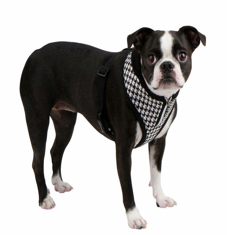 puppia prestige geschirr schwarz mops franz sische bulldogge hundegeschirr. Black Bedroom Furniture Sets. Home Design Ideas
