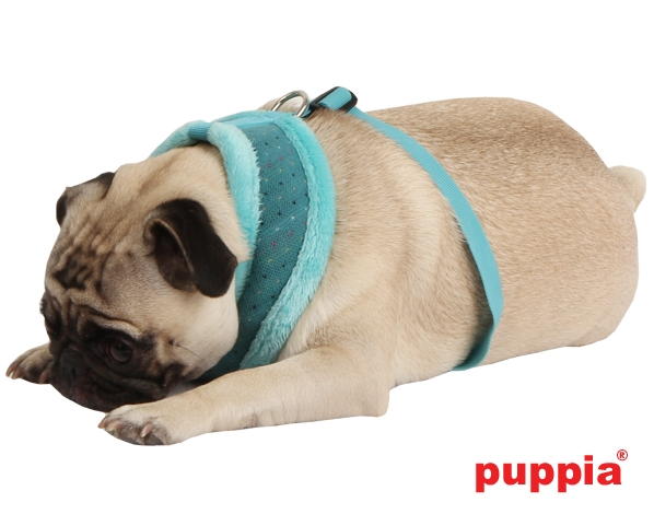 Hundegeschirr Mops